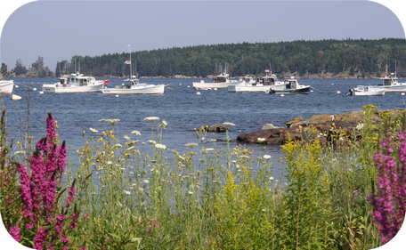 View of Owl's Head Harbor on the coast of Maine